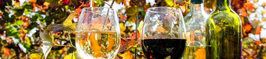 selezione di vini imperdibili proposti in vendita vinopoly.it enoteca online