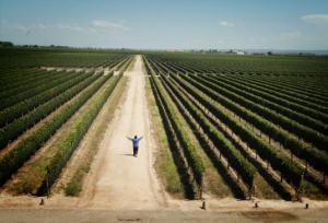 Charlie entre los vastos viñedos de Mendoza