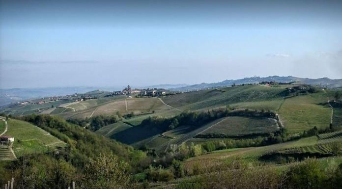 Panorama Vigne Monforte d'Alba
