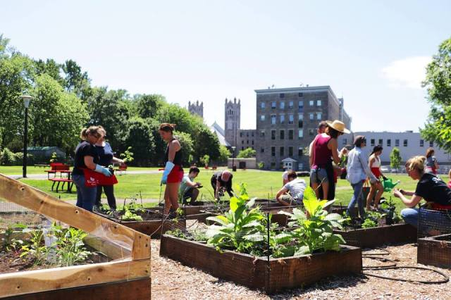 The Vanier Collective Gardens
