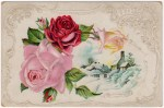 Victorian Winter Roses Postcard