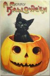 Cat in Pumpkin Cute Vintage Halloween Postcard