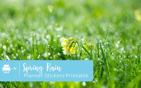 spring rain on flowers
