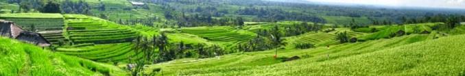 Jatuwulih rice terraces