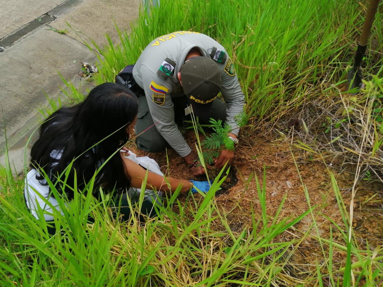 Recuperación de Monumento en el sendero ecológico Virgen de manaré siembra de 261 árboles