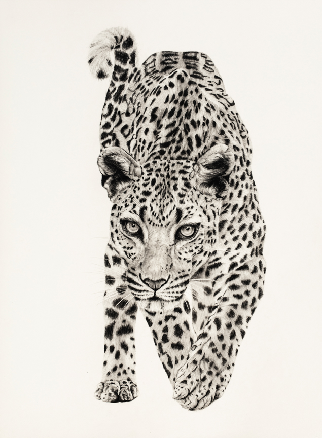 Arabian Leopard - limited edition print