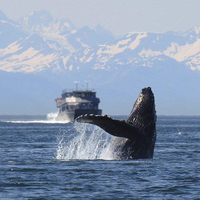 Whale Watching, Alaska (Photo Credit: Pixabay)