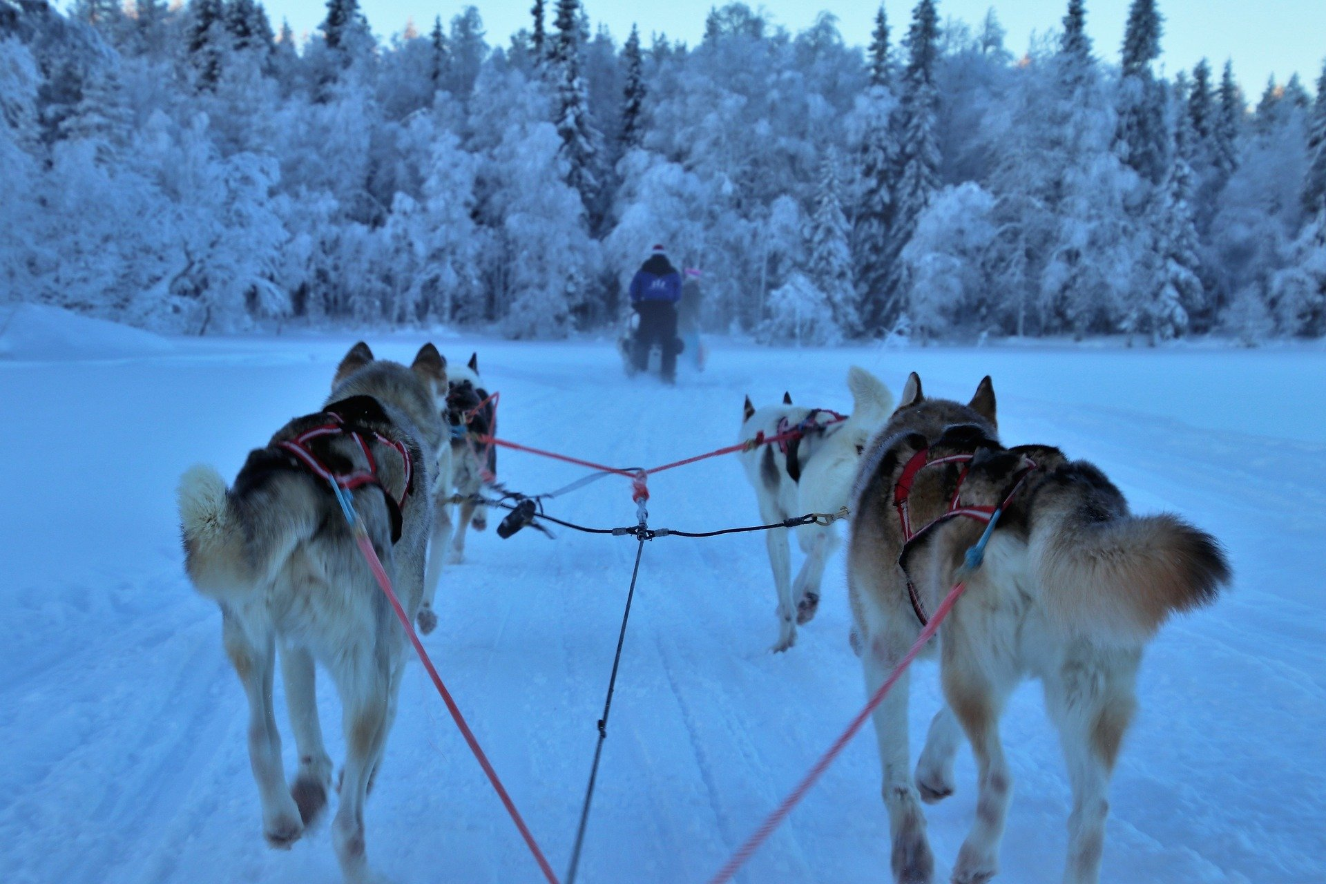 Dog Sledding, Alaska (Photo Credit: Pixabay)