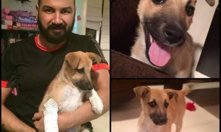 Звезди правят добро: Азис прибра вкъщи бездомно куче намерено в Благоевград