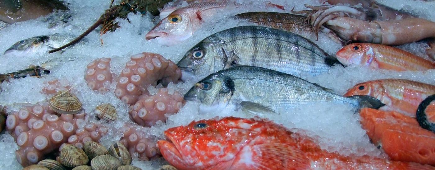 fish-480830_1280
