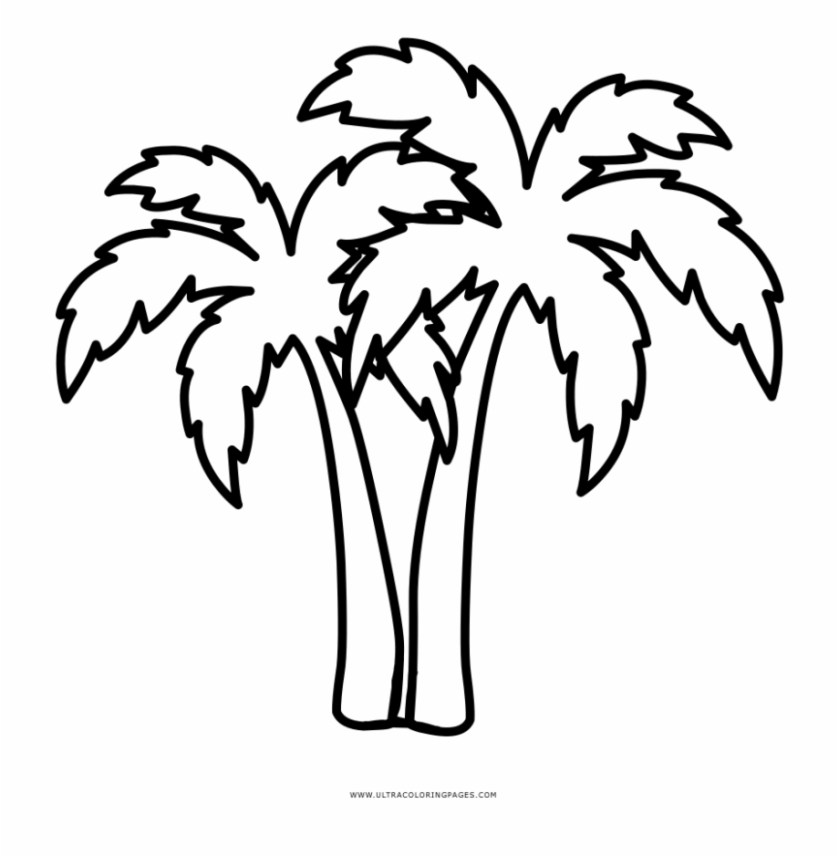 palm tree coloring page  palmeras hawaianas para colorear