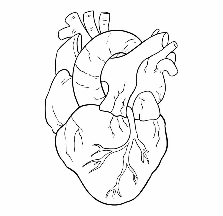 Easy Drawing Guides On Twitter Are You Ready To Draw Human Heart Drawing Easy Transparent Png Download 3188948 Vippng