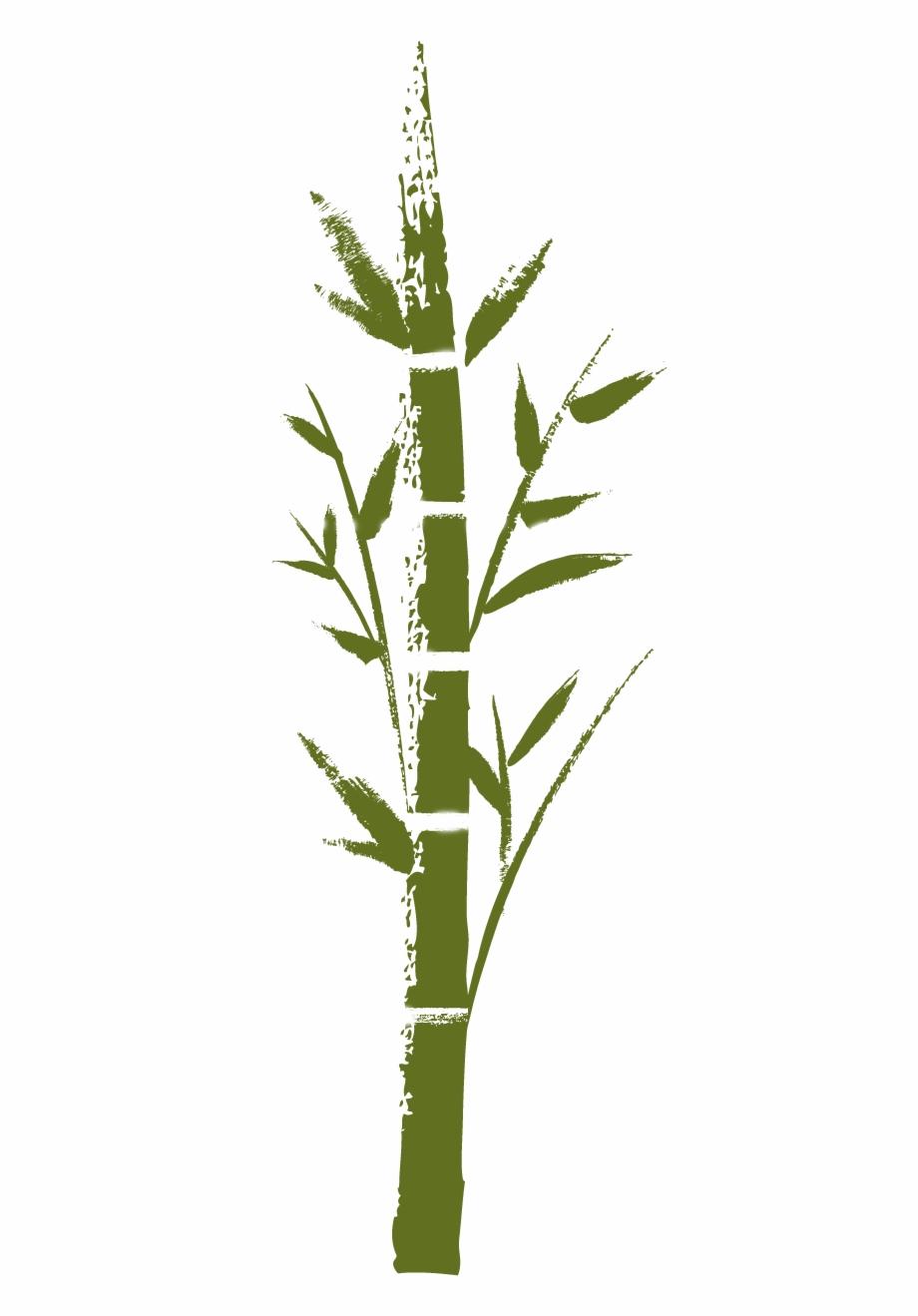 bamboo dessin zen bambou