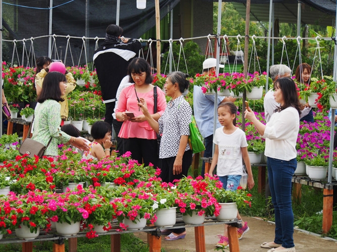 sa dec flower village drawing crowds as tet nears