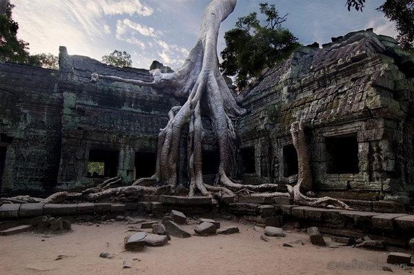 人類沒法阻止這21棵樹的頑強生命力,令你驚訝萬分的大自然力量!