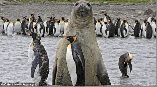 35個動物「亂入」的搶鏡時刻,你們天生就懂搞笑的嗎?