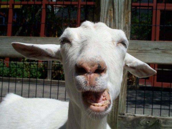 34隻沒準備好面對鏡頭的動物,牠們的趣怪表情竟比人類更搞笑!