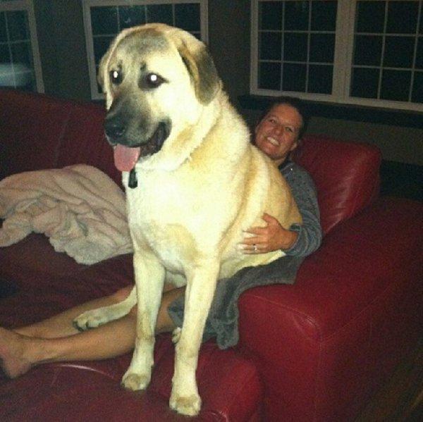 這28隻可愛小狗絕不會給你私人空間,因為抱抱依偎才是正經事!
