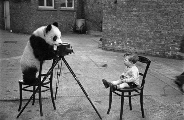 為何要這樣做?21幅老照片證明人類和動物可以玩得很瘋狂!