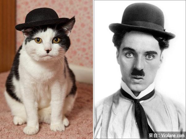 貓有相似!這18隻喵星人根本就是這些名人和物件的化身!