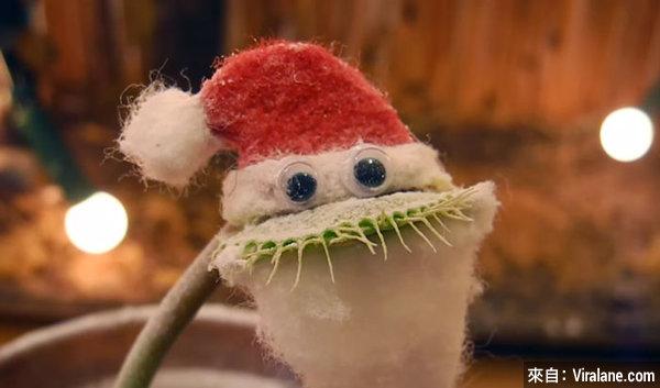捕蠅草變身聖誕老人,你想要禮物?小心會被咬一口!