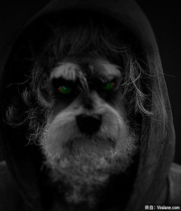 憤怒小狗令網友瘋掉,創意惡搞修圖笑翻你!