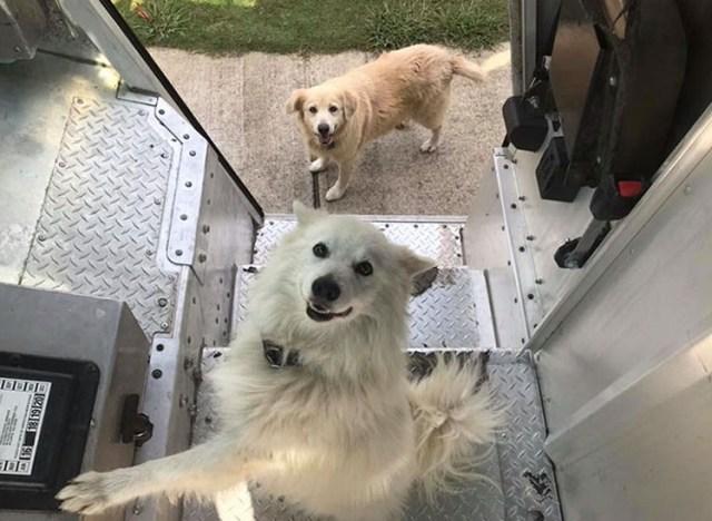 Los conductores de UPS tienen un grupo en Facebook que publica las fotos de los perros con los que se encuentran durante el envío
