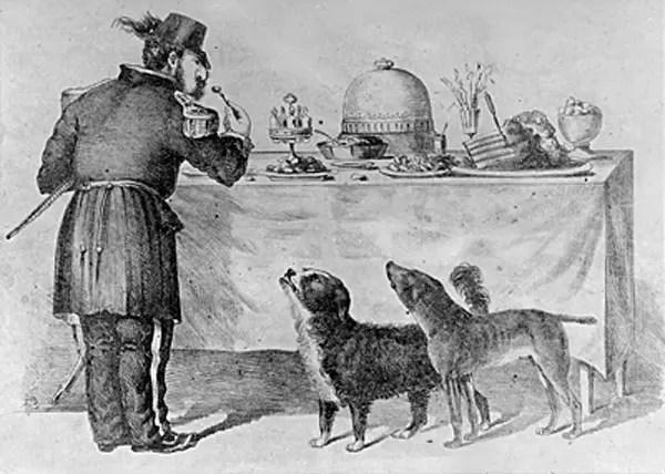 datos-curiosos-de-perros-12