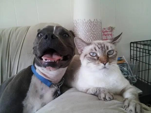 8pitbulls&gatos