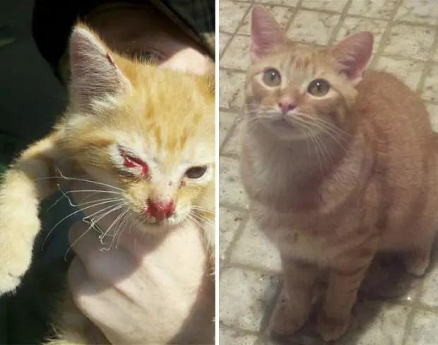 gatitos lastimados (15)