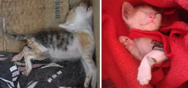 gatitos lastimados (5)