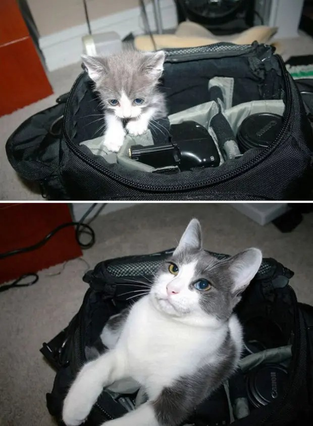 gatos creciendo (9)