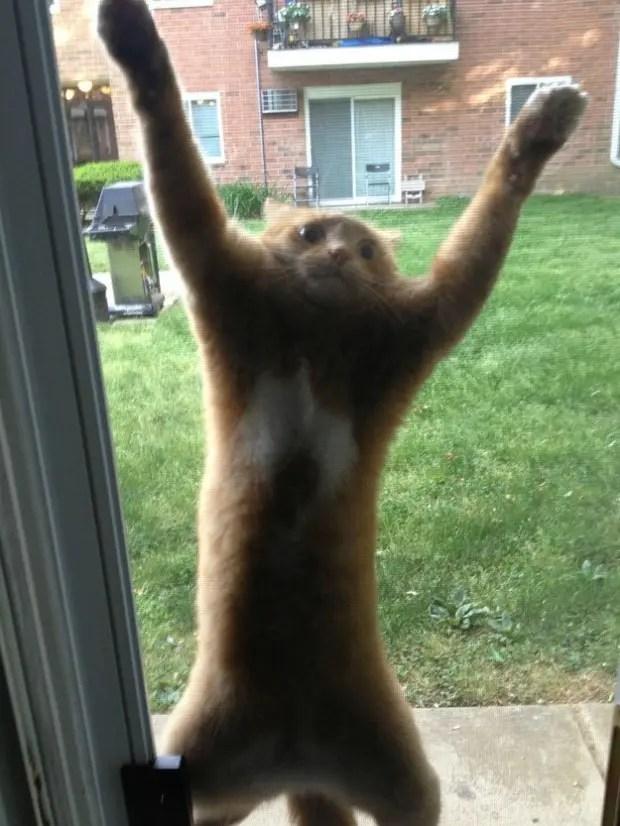 gatos que tomaron malas decisiones (7)