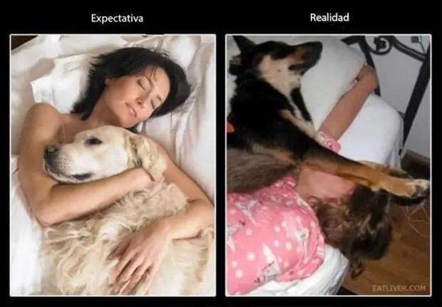 gente que tiene perros sabe (2)