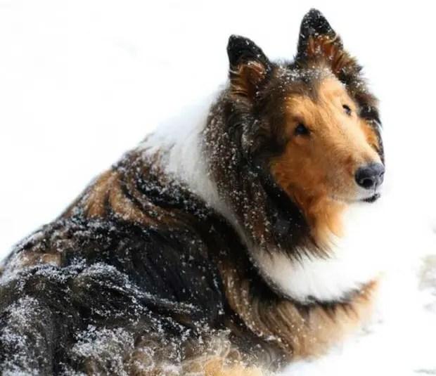 gente que tiene perros sabe (25)