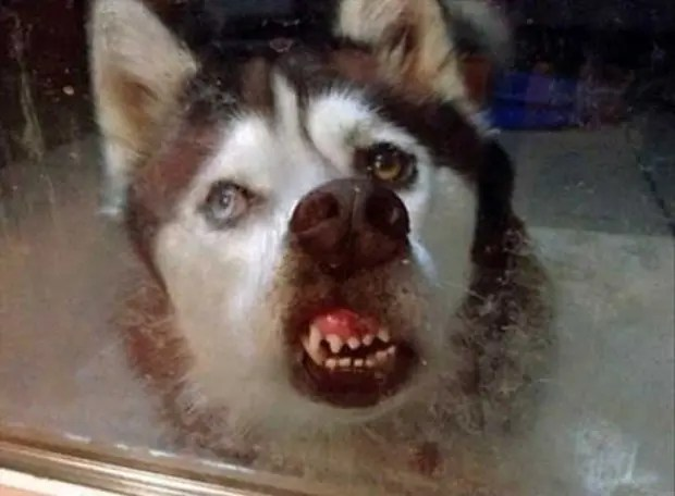 gente que tiene perros sabe (3)