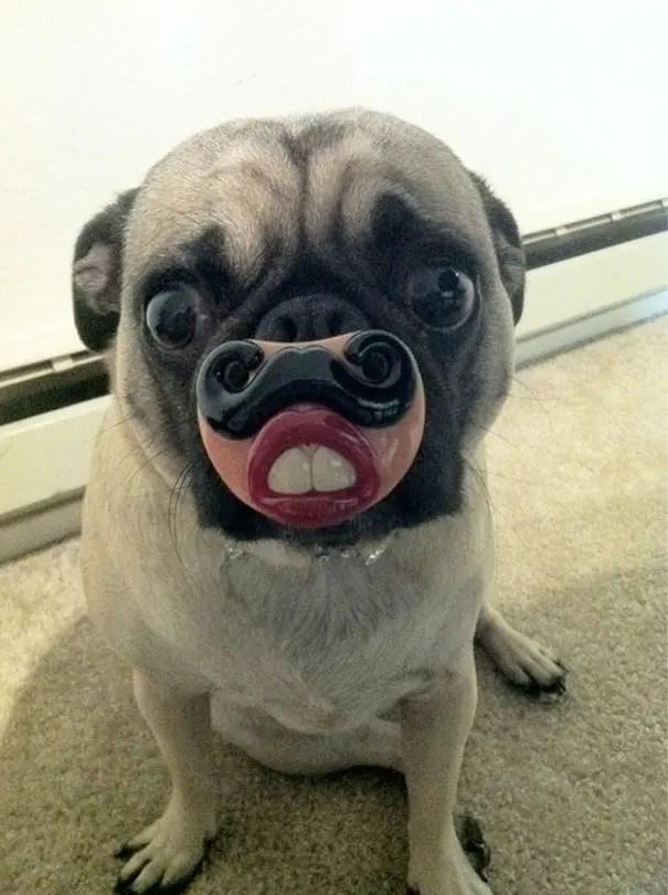 juguetes de perro graciosos (8)