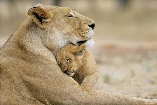 maternidad-animales-12