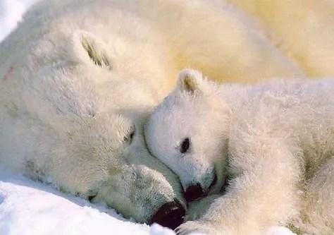 maternidad-animales-19
