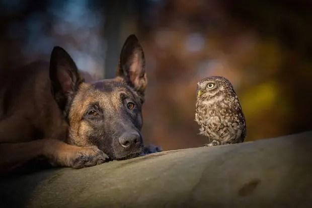 perro-y-buho-amigos-6