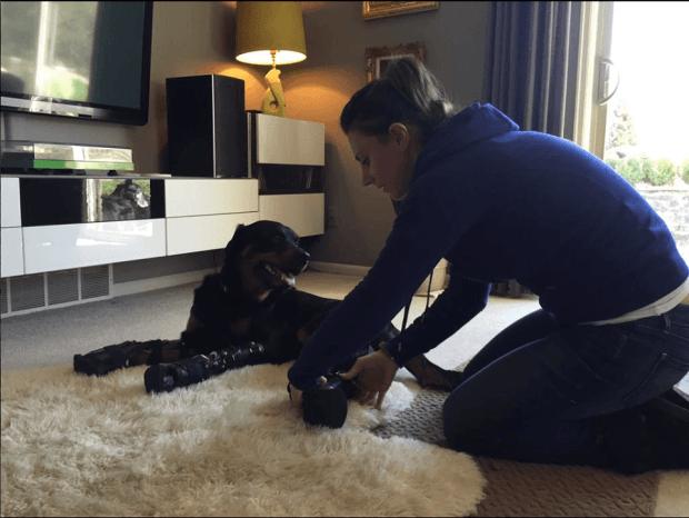perro-rottweiller-protesis-patas-dueña