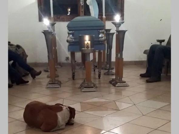 perros callejeros asisten al funeral de mujer (2)