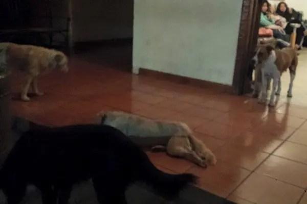 perros callejeros asisten al funeral de mujer (5)