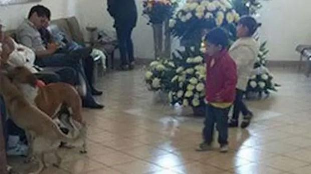 perros callejeros asisten al funeral de mujer (7)