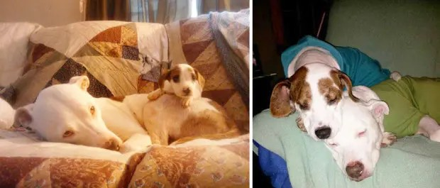 dogs-before-and-after-29__880