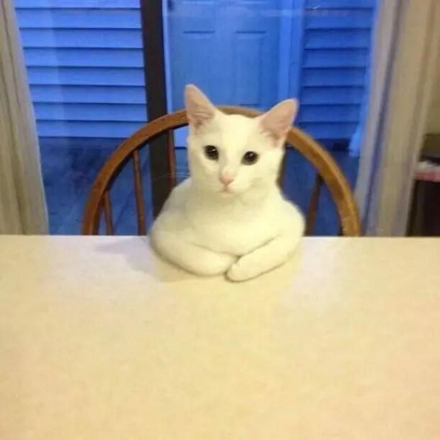 gatos rebeldes sentados5