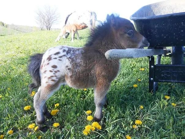 tiny-horses-1__605