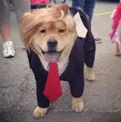Perro-trump-