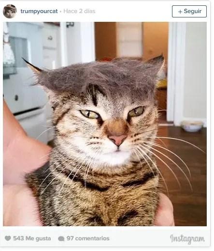 Trumpcat-