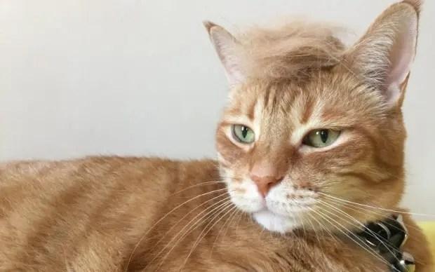 Trumpcat4